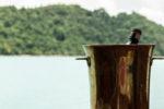 Isabella Yachts Phuket : Maha Bhetra private boat on rent